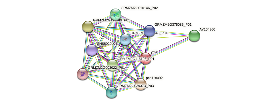 GRMZM2G097746_P01 protein (Zea mays) - STRING interaction network