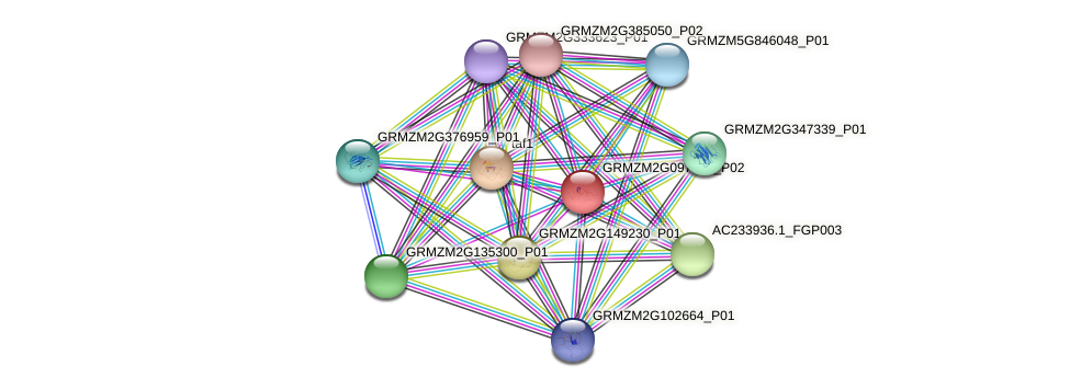 GRMZM2G097775_P01 protein (Zea mays) - STRING interaction network