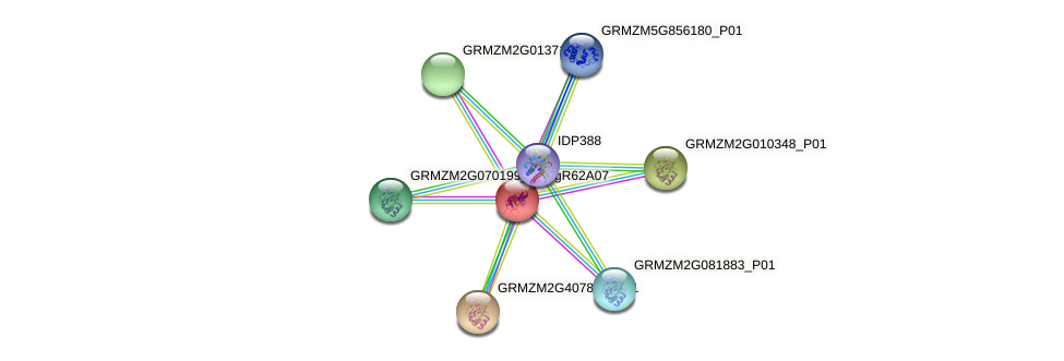GRMZM2G097813_P01 protein (Zea mays) - STRING interaction network