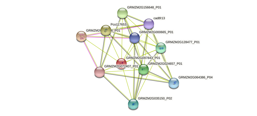 GRMZM2G097843_P01 protein (Zea mays) - STRING interaction network
