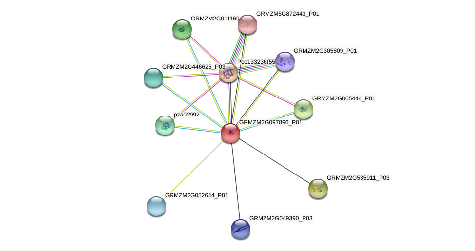 GRMZM2G097896_P01 protein (Zea mays) - STRING interaction network