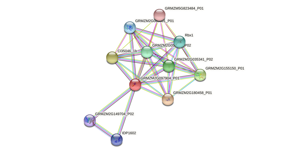 GRMZM2G097904_P01 protein (Zea mays) - STRING interaction network