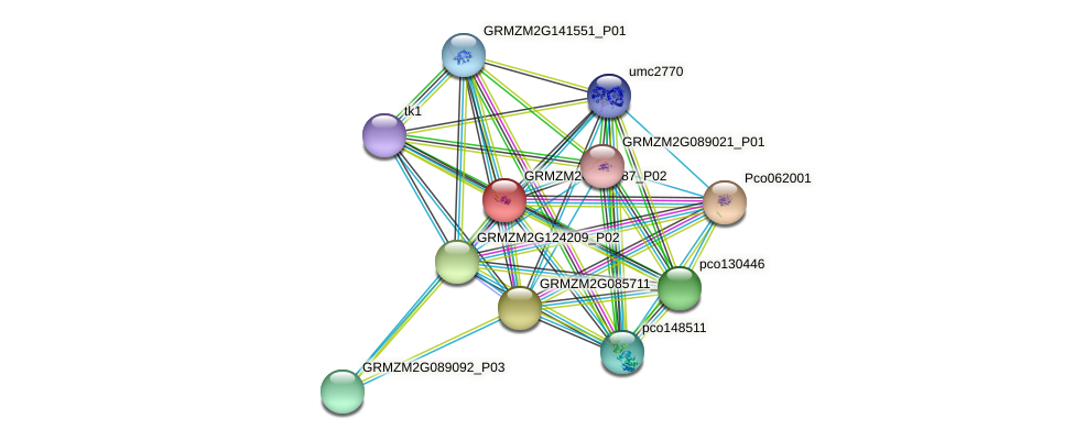 GRMZM2G097987_P02 protein (Zea mays) - STRING interaction network