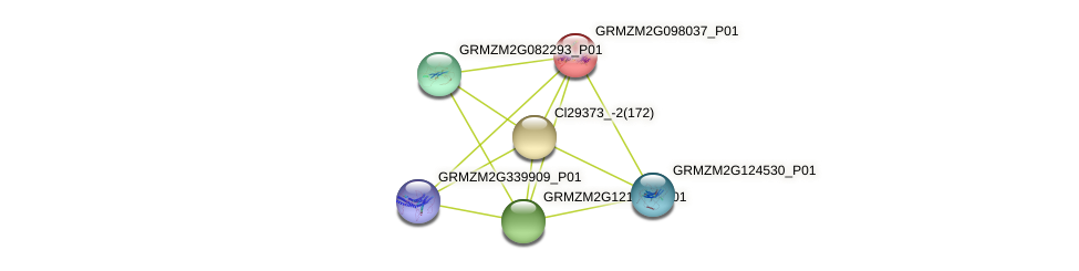 GRMZM2G098037_P01 protein (Zea mays) - STRING interaction network