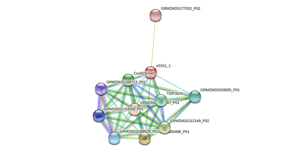 MMT1 protein (Zea mays) - STRING interaction network