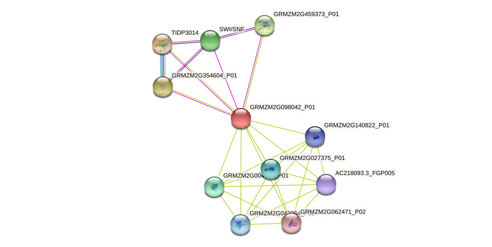 GRMZM2G098042_P01 protein (Zea mays) - STRING interaction network