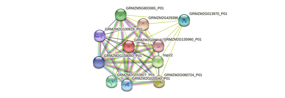 GRMZM2G098167_P01 protein (Zea mays) - STRING interaction network