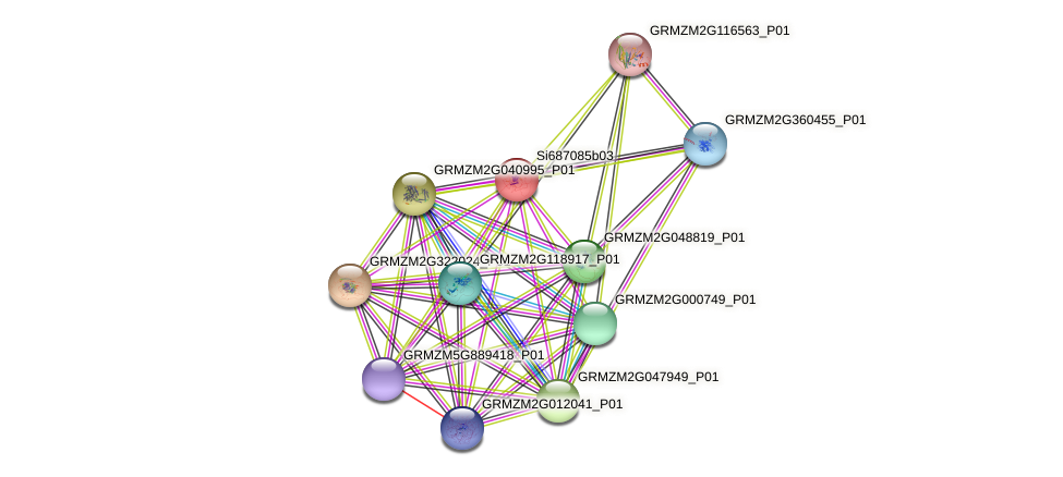 GRMZM2G098174_P01 protein (Zea mays) - STRING interaction network