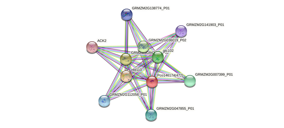 GRMZM2G098208_P01 protein (Zea mays) - STRING interaction network
