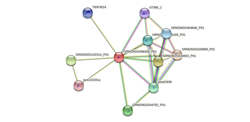 GRMZM2G098305_P01 protein (Zea mays) - STRING interaction network