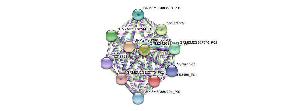 GRMZM2G098496_P01 protein (Zea mays) - STRING interaction network