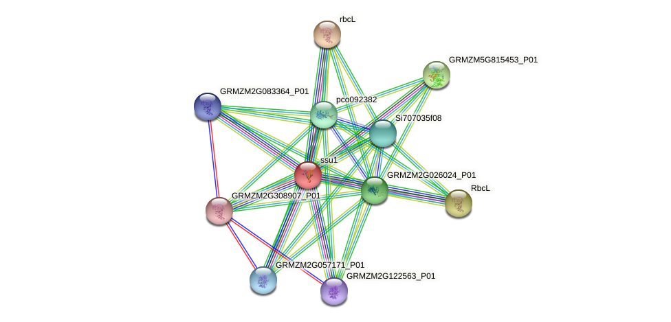 RBCS protein (Zea mays) - STRING interaction network