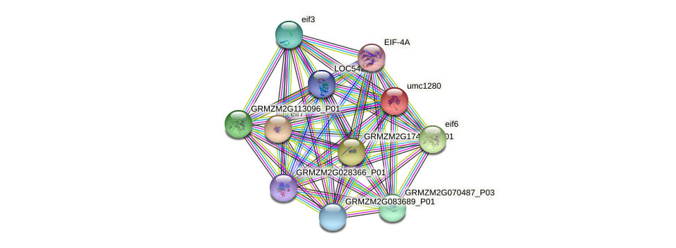 umc1280 protein (Zea mays) - STRING interaction network