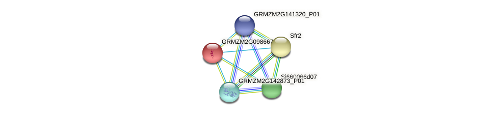 GRMZM2G098667_P01 protein (Zea mays) - STRING interaction network