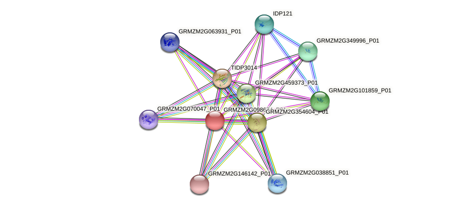 GRMZM2G098674_P01 protein (Zea mays) - STRING interaction network