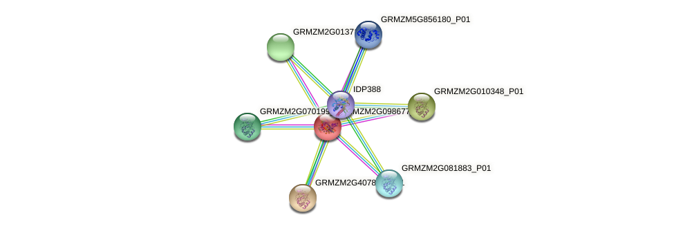 GRMZM2G098677_P01 protein (Zea mays) - STRING interaction network