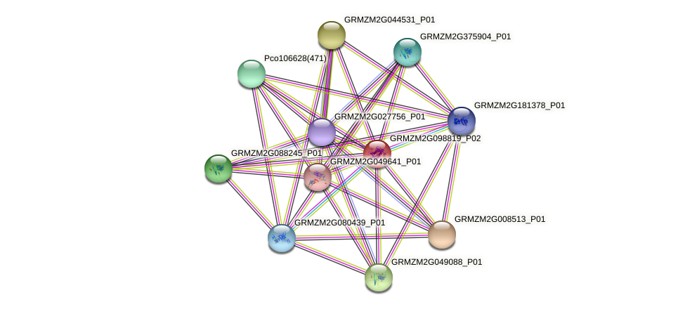 GRMZM2G098819_P02 protein (Zea mays) - STRING interaction network