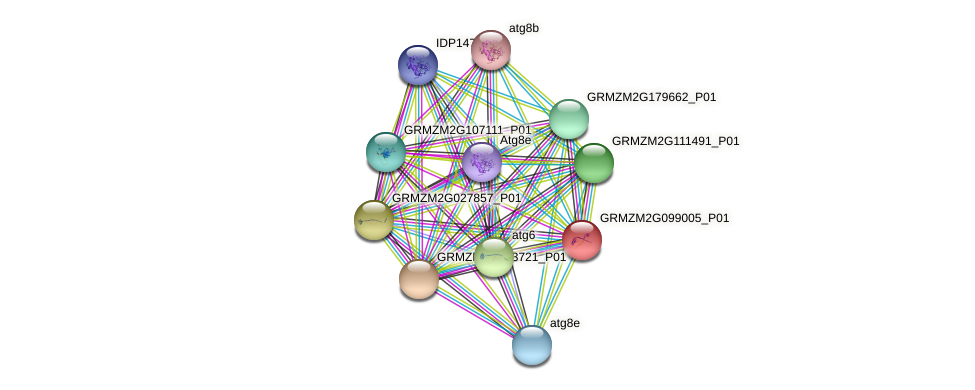 GRMZM2G099005_P01 protein (Zea mays) - STRING interaction network