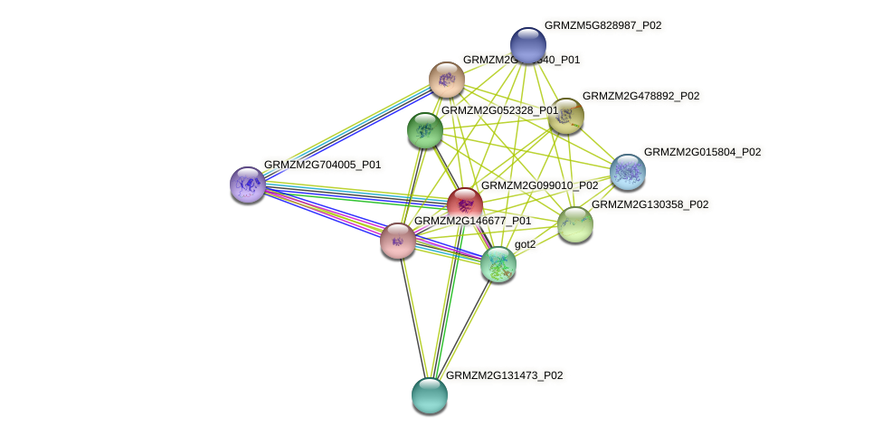 GRMZM2G099010_P02 protein (Zea mays) - STRING interaction network