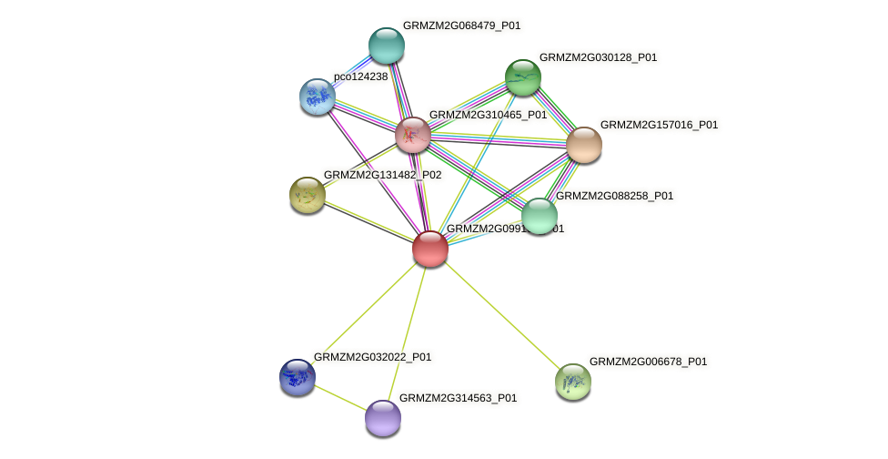 GRMZM2G099105_P01 protein (Zea mays) - STRING interaction network