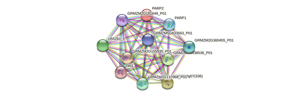 PARP2 protein (Zea mays) - STRING interaction network