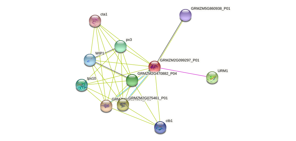 GRMZM2G099297_P01 protein (Zea mays) - STRING interaction network