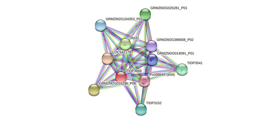 RS2Z37B protein (Zea mays) - STRING interaction network