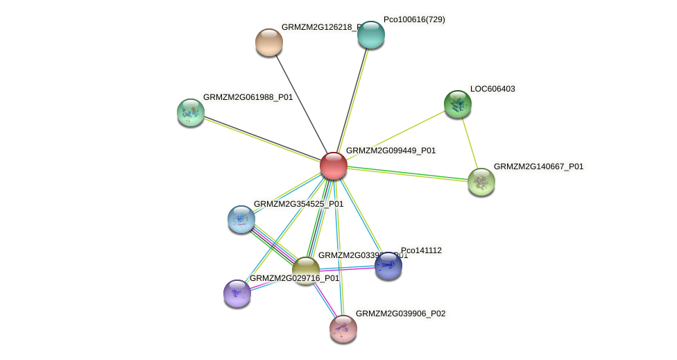 GRMZM2G099449_P01 protein (Zea mays) - STRING interaction network