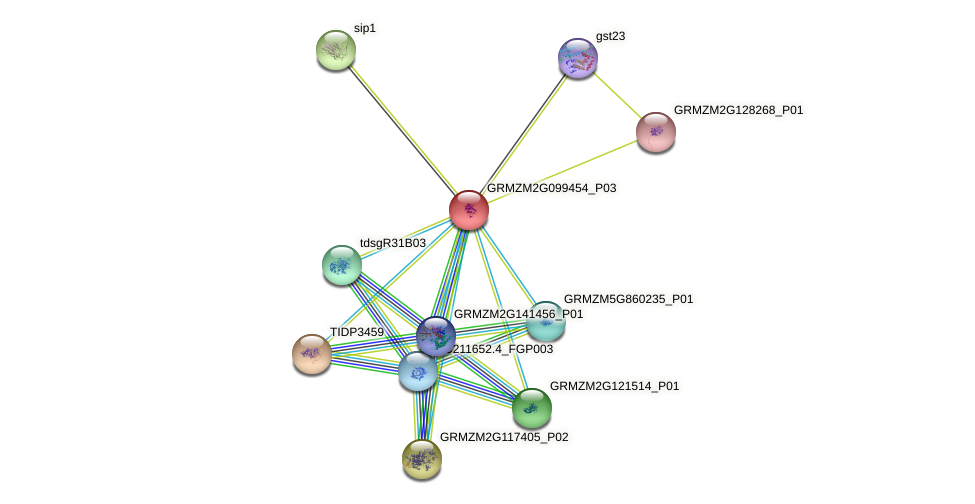 GRMZM2G099454_P03 protein (Zea mays) - STRING interaction network