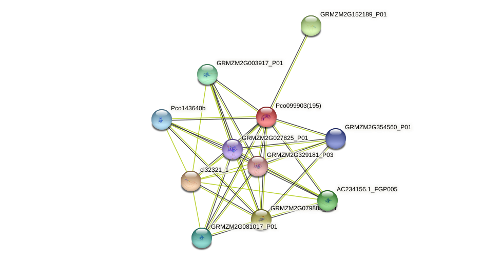 GRMZM2G099491_P01 protein (Zea mays) - STRING interaction network