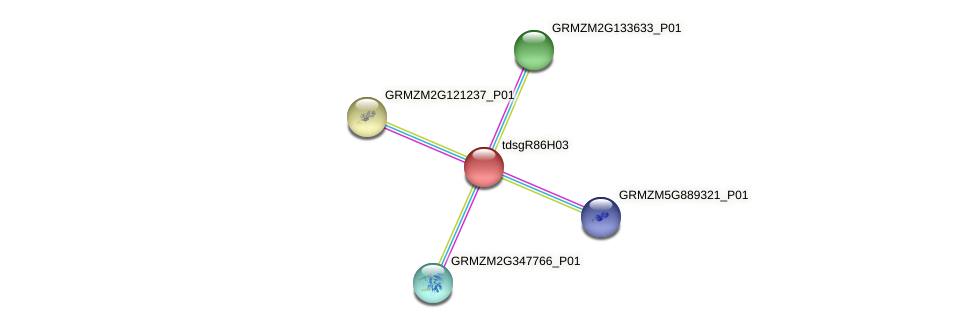 GRMZM2G099580_P01 protein (Zea mays) - STRING interaction network