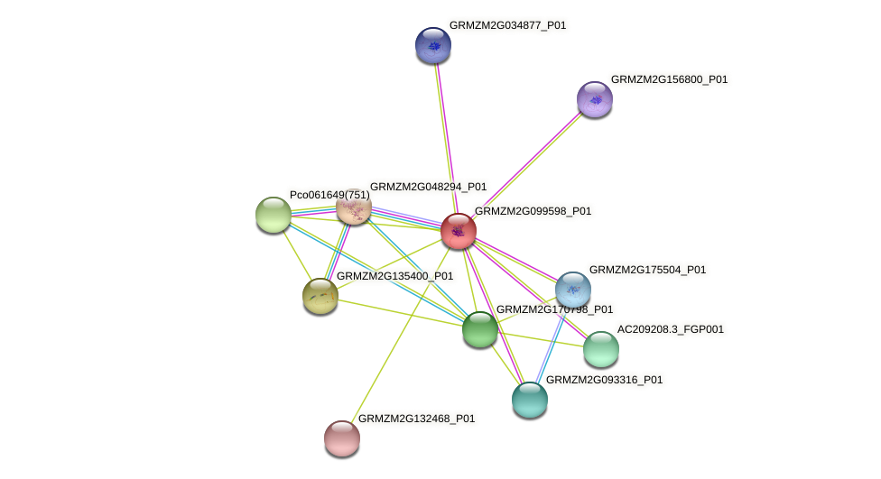 GRMZM2G099598_P01 protein (Zea mays) - STRING interaction network