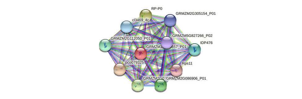 GRMZM2G099657_P01 protein (Zea mays) - STRING interaction network
