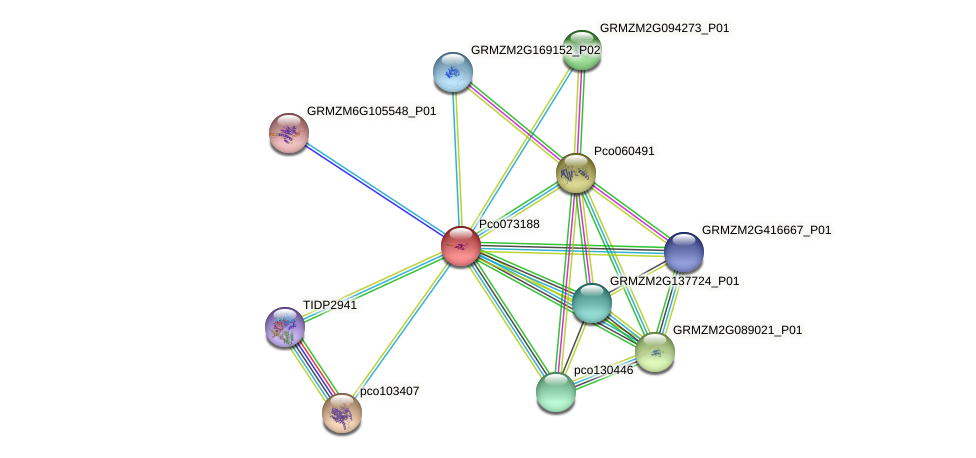 Zm.23529 protein (Zea mays) - STRING interaction network
