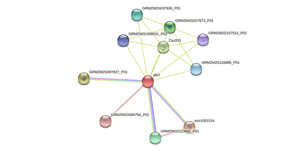 GRMZM2G099754_P02 protein (Zea mays) - STRING interaction network
