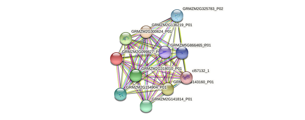 GRMZM2G099827_P01 protein (Zea mays) - STRING interaction network