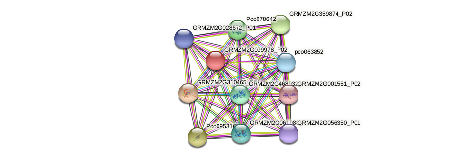 GRMZM2G099978_P02 protein (Zea mays) - STRING interaction network