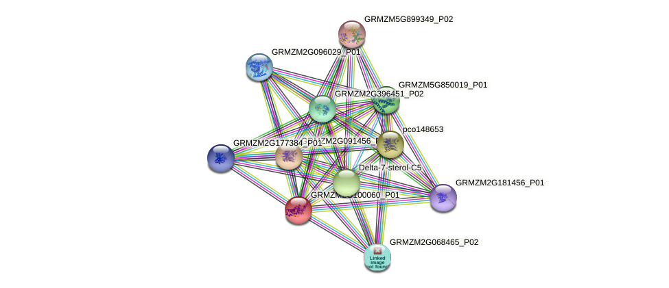 GRMZM2G100060_P01 protein (Zea mays) - STRING interaction network