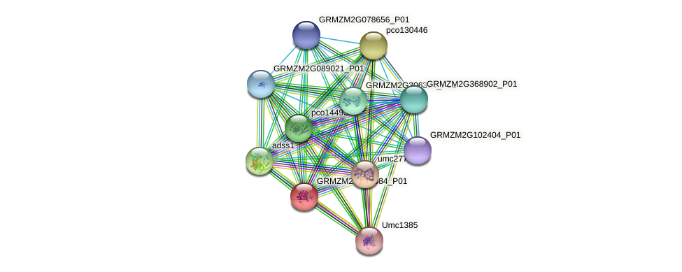 GRMZM2G100084_P01 protein (Zea mays) - STRING interaction network