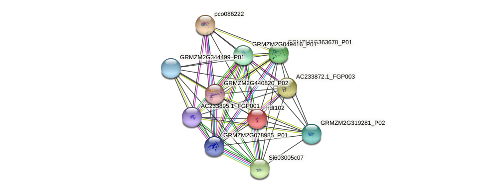 HDT2 protein (Zea mays) - STRING interaction network
