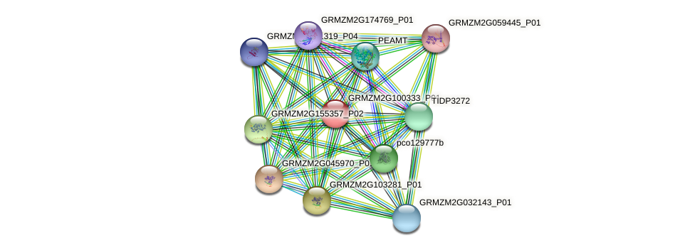 GRMZM2G100333_P01 protein (Zea mays) - STRING interaction network