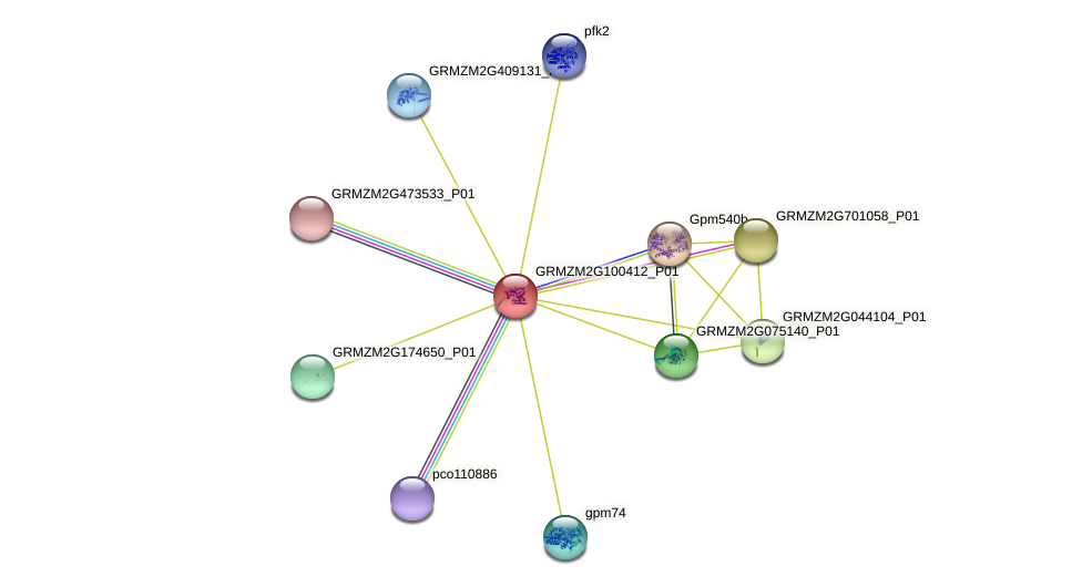 GRMZM2G100412_P01 protein (Zea mays) - STRING interaction network