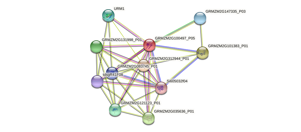 GRMZM2G100497_P05 protein (Zea mays) - STRING interaction network