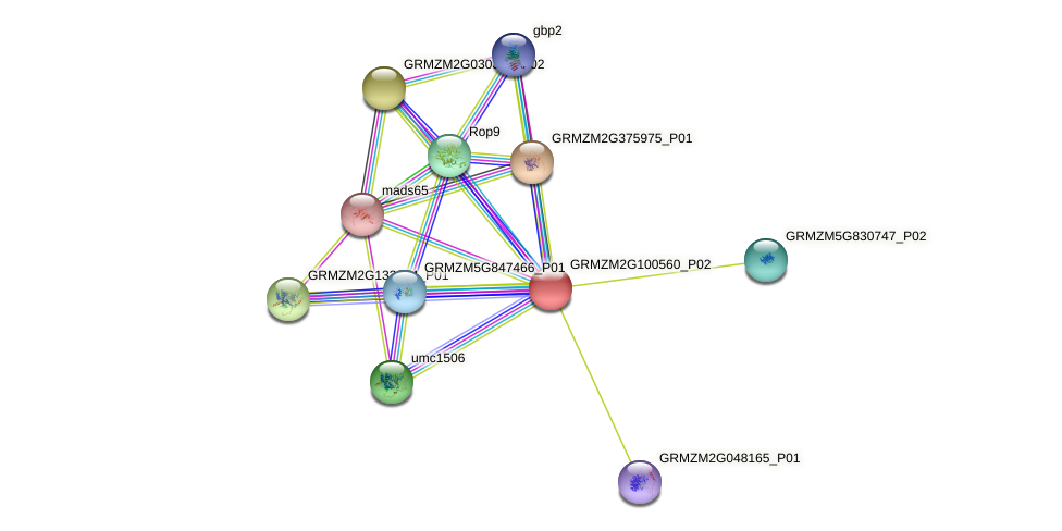 GRMZM2G100560_P02 protein (Zea mays) - STRING interaction network