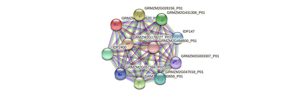 GRMZM2G100620_P01 protein (Zea mays) - STRING interaction network