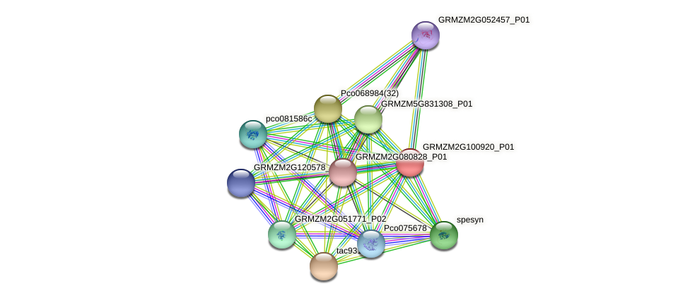 GRMZM2G100920_P01 protein (Zea mays) - STRING interaction network