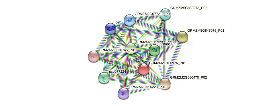 Zm.127360 protein (Zea mays) - STRING interaction network