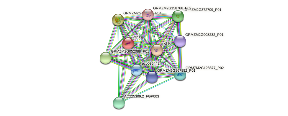 Zm.84683 protein (Zea mays) - STRING interaction network
