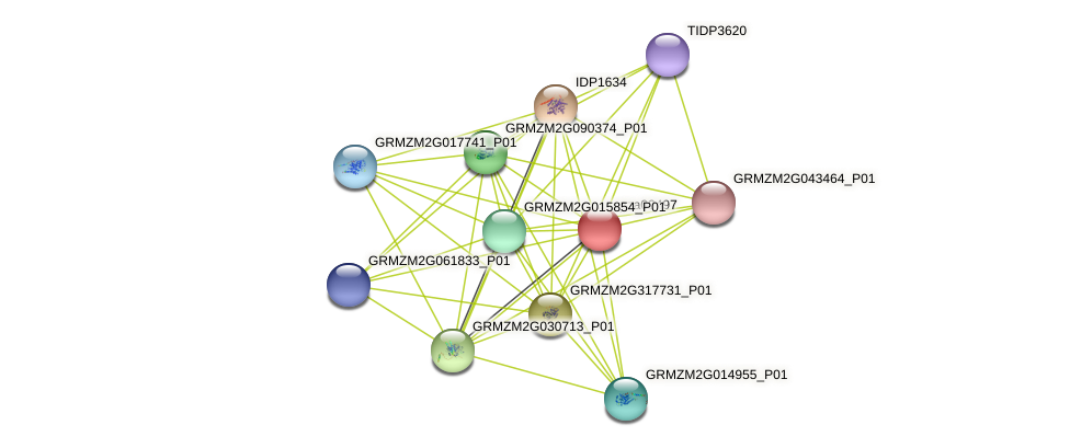 Zm.44681 protein (Zea mays) - STRING interaction network