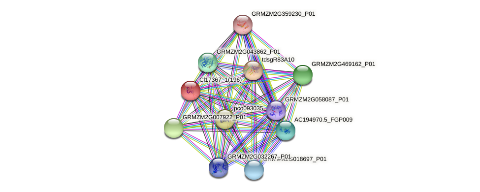 GRMZM2G101250_P03 protein (Zea mays) - STRING interaction network